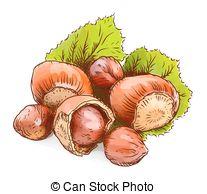 Hazelnut Illustrations and Stock Art. 1,277 Hazelnut illustration.