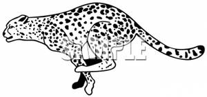 Clipart Picture of a Leopard Running.