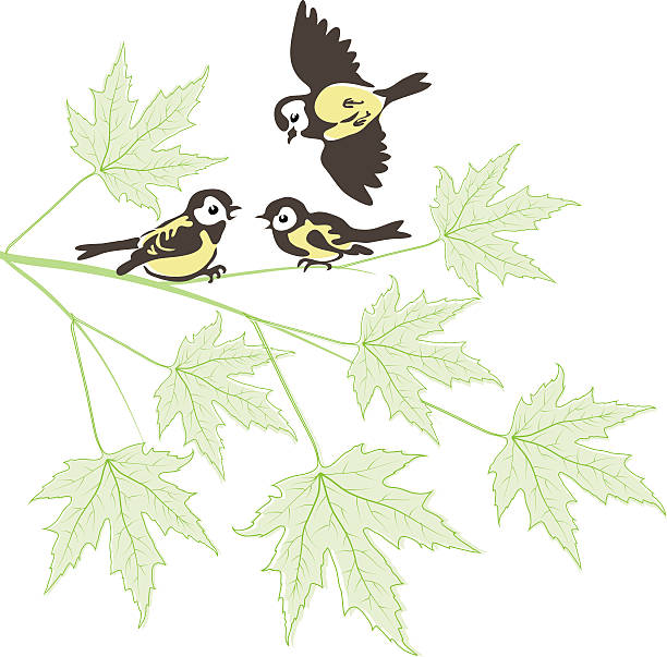 Chinese Maple Tree Cartoons Clip Art, Vector Images.