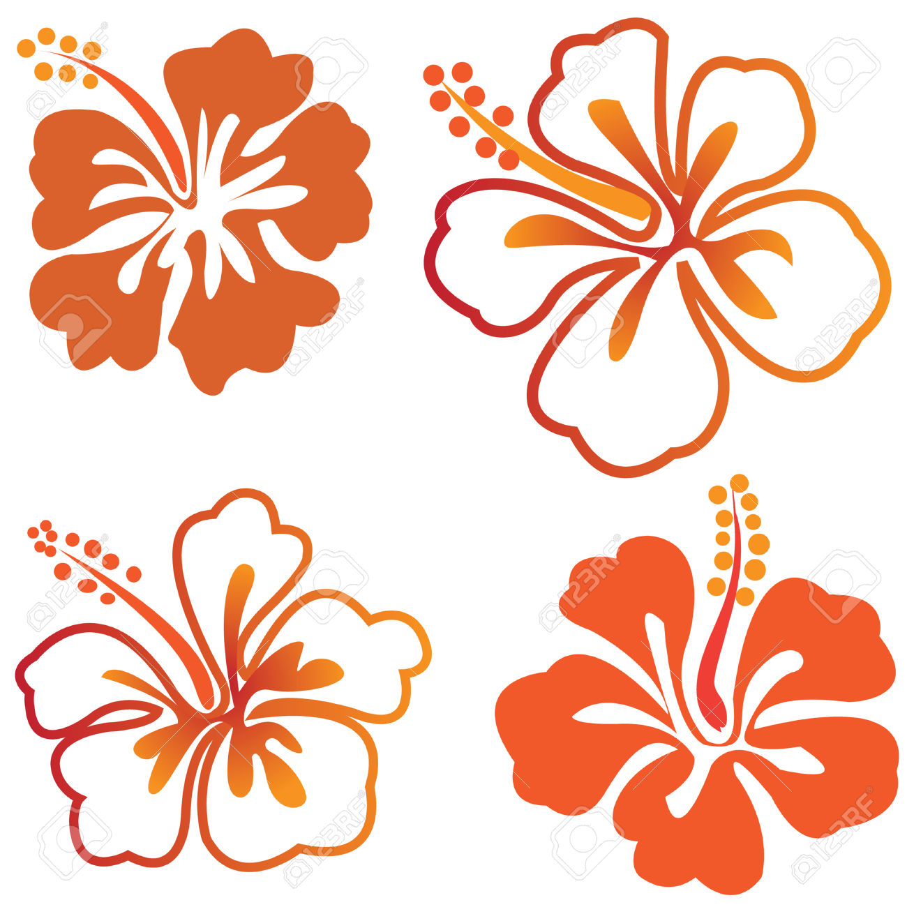 Hibiscus Chinese Rose Flowers Isolated Royalty Free Cliparts.