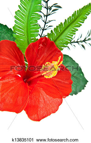 Stock Photography of Closeup Artificial hibiscus, Chinese Rose on.