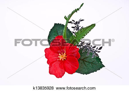 Pictures of Artificial hibiscus, Chinese Rose on White Background.