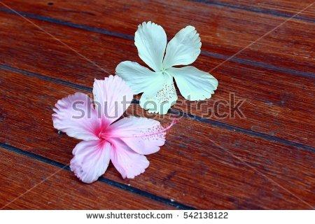 """""""hibiscus_rosa."""
