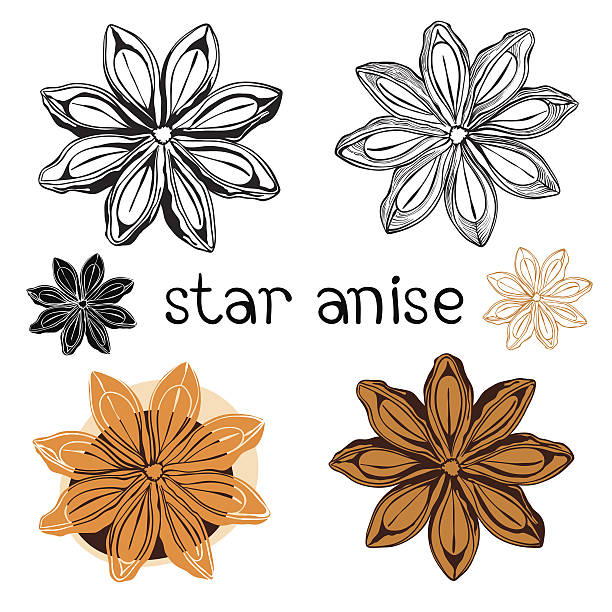 Chinese Star Anise Clip Art, Vector Images & Illustrations.