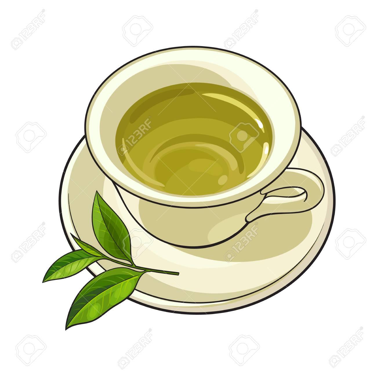 China, porcelain cup, saucer and fresh green tea leaf, sketch...