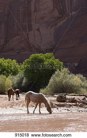 Pictures of Wild horses, Canyon De Chelly National Monument.