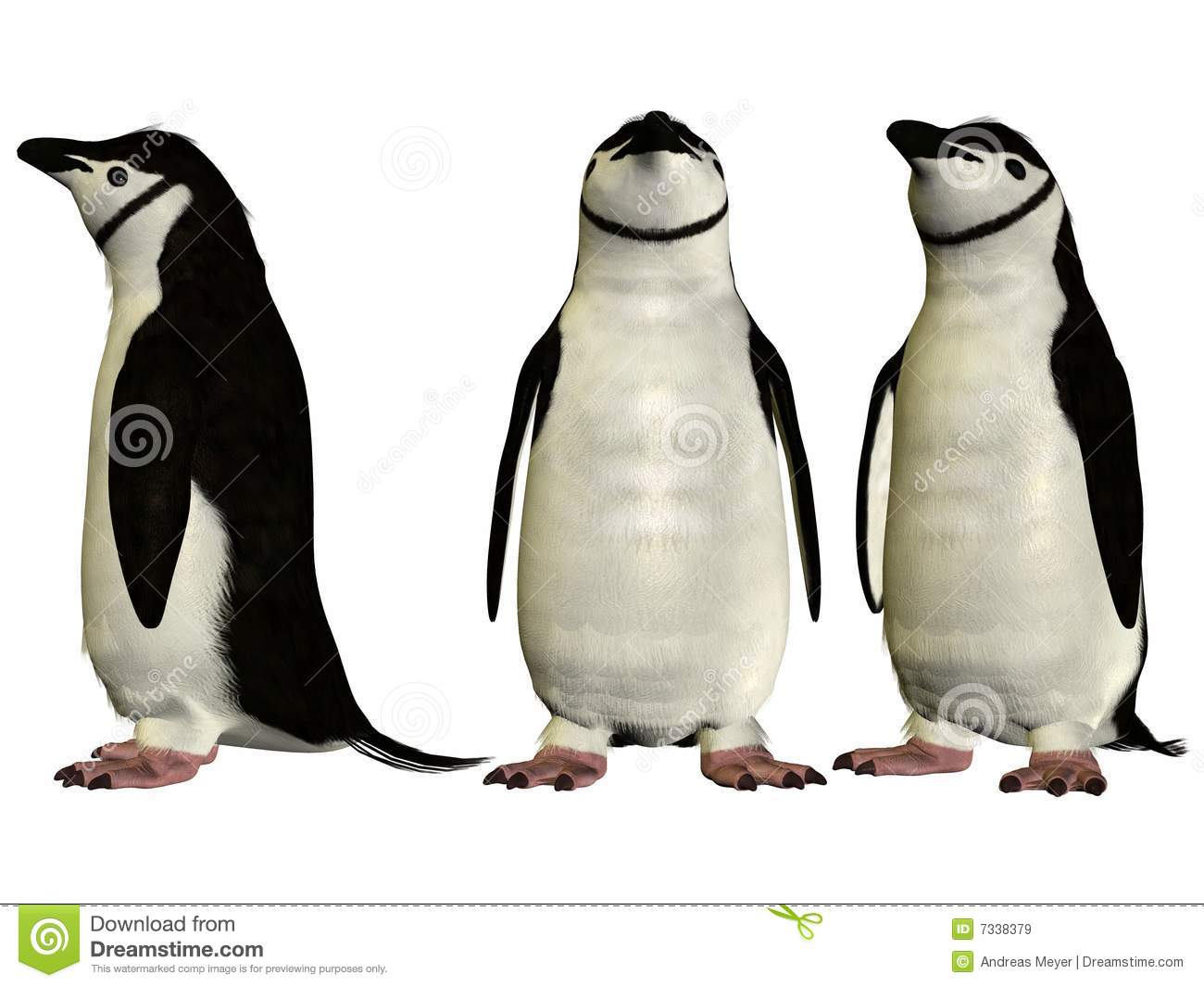 Chinstrap Penguin Royalty Free Stock Images.