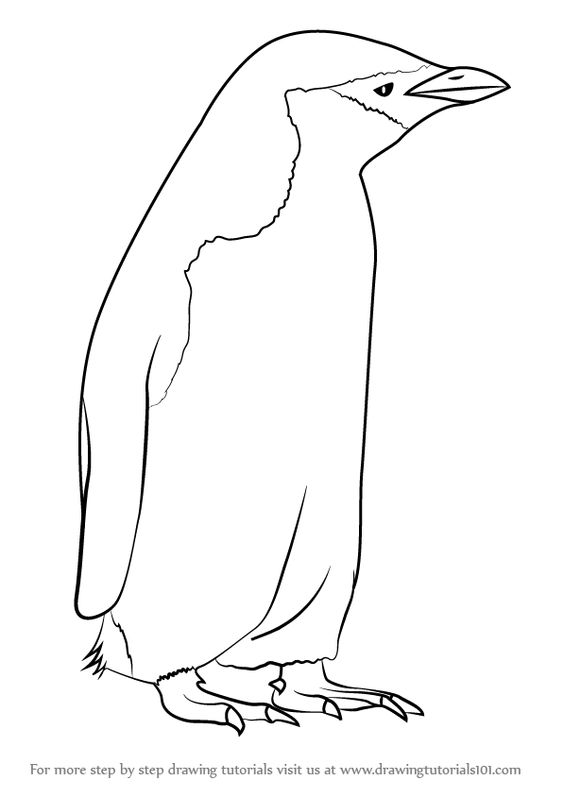Learn How to Draw a Chinstrap Penguin (Antarctic Animals) Step by.