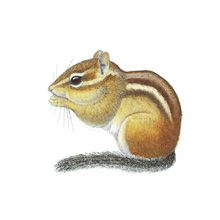Free Chipmunk Cliparts, Download Free Clip Art, Free Clip Art on.
