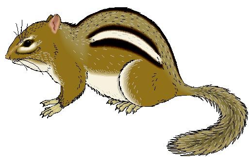 Chipmunk Clipart.