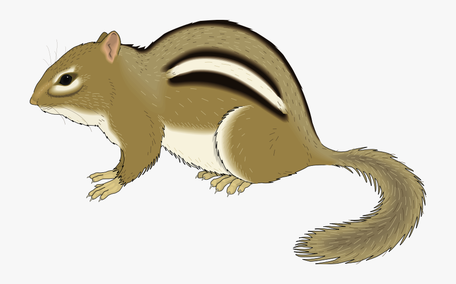 Chipmunk Animal Clipart Pictures Royalty Free Org.