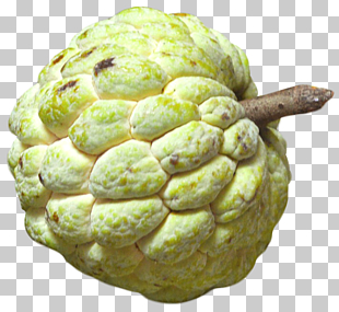 40 cherimoya PNG cliparts for free download.