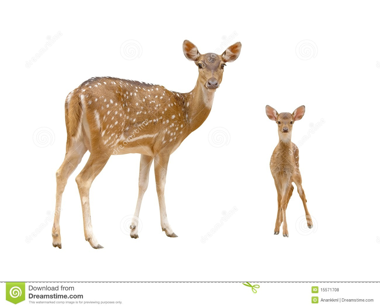 Spotted deer clipart - Clipground