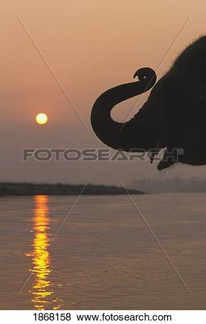 Pictures of elephant, chitwan national park, nepal 1868158.
