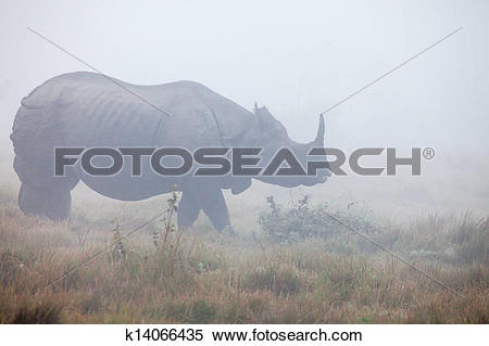 Stock Image of Indian one horned rhinoceros at Royal Chitwan.