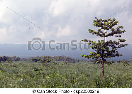 Stock Photography of Lone Tree on Grassland, Chitwan National Park.