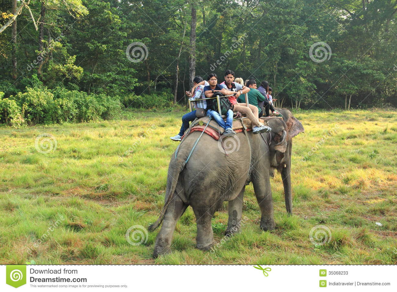Elephant Safari In Chitwan National Park In Nepal. Editorial Photo.