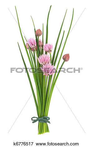 Picture of Chives Herb Flower Posy k6776517.