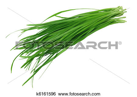 Stock Images of Garlic Chives k6161596.