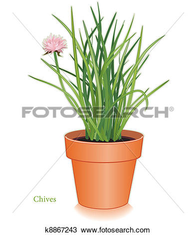 Clipart of Chives Herb in Clay Flowerpot k8867243.
