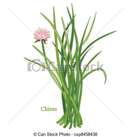 Chives Vector Clipart Royalty Free. 287 Chives clip art vector EPS.