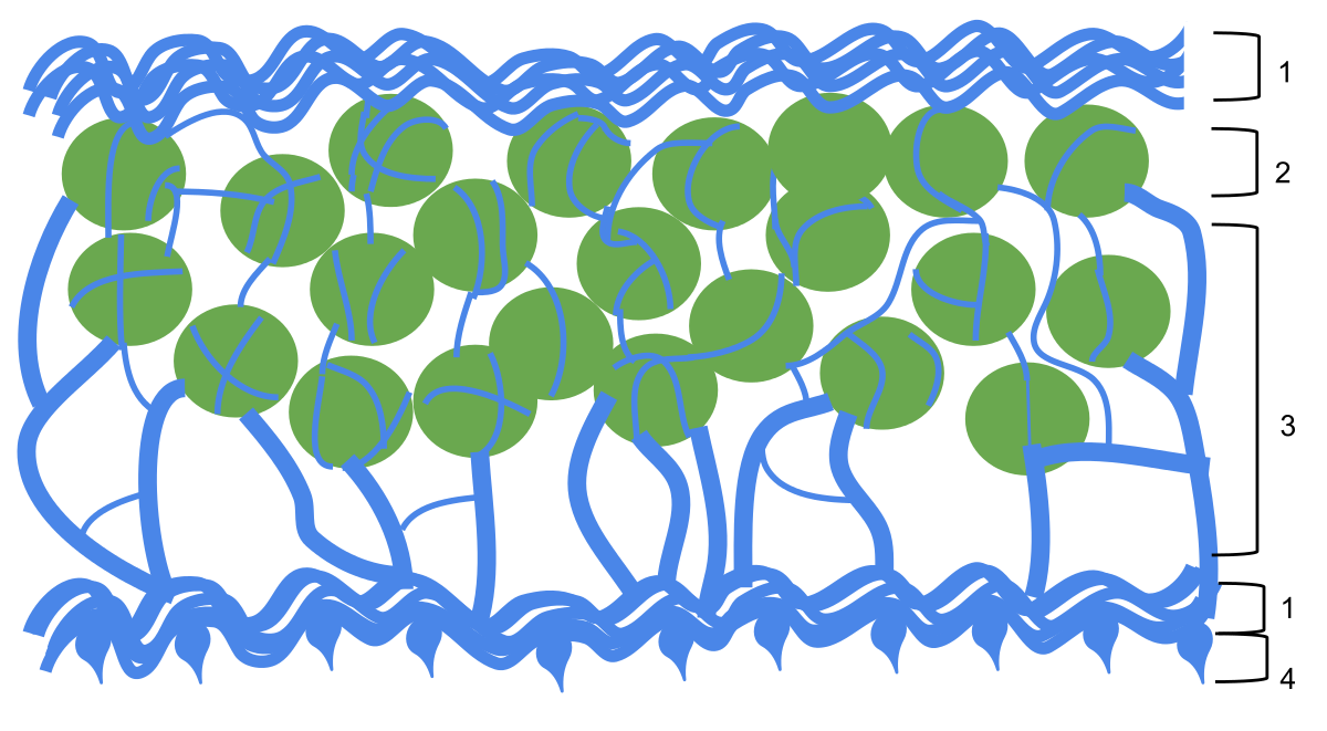 Symbiosis in lichens.