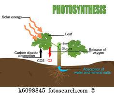 Chlorophyll Clip Art Illustrations. 397 chlorophyll clipart EPS.
