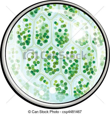 Chlorophyll Stock Illustrations. 600 Chlorophyll clip art images.