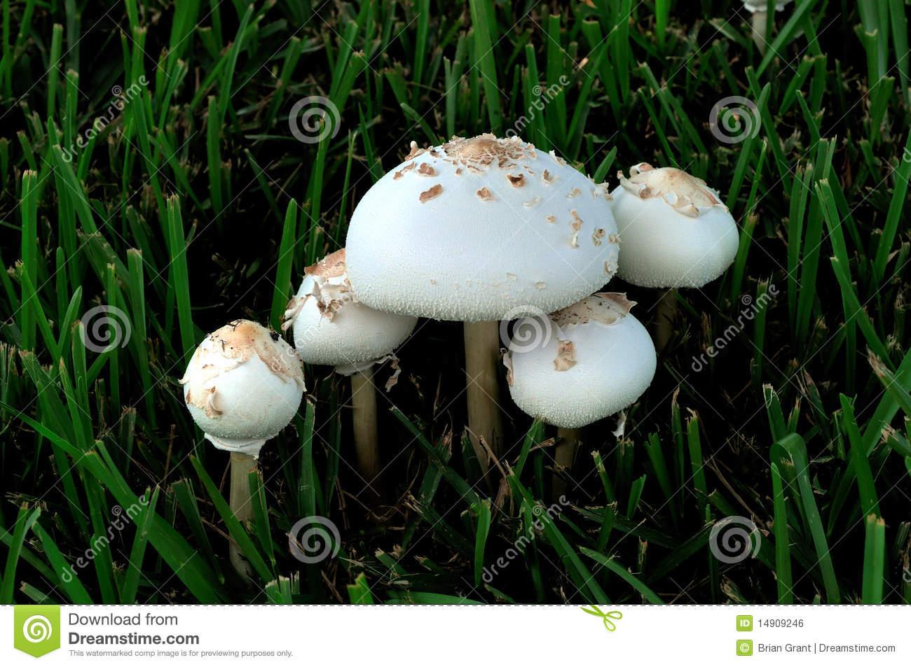 Poison Mushroom.