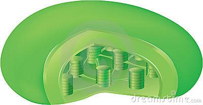 Chloroplast Stock Illustrations.
