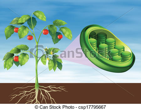 Chloroplast Stock Illustrations. 116 Chloroplast clip art images.