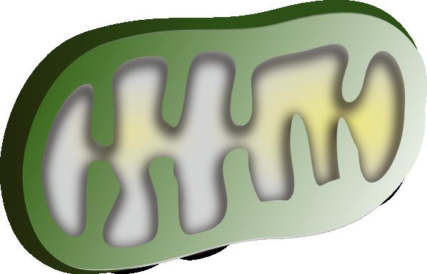 Chloroplast Cliparts.