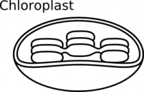 Chloroplast Photosynthesis Clip Art Download 6 clip arts (Page 1.