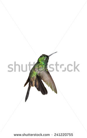 Trochilidae Stock Photos, Royalty.