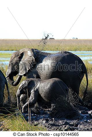 Stock Image of Elephants Taking a Mud Shower, Chobe River.