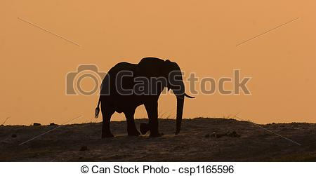 Stock Image of Elephant in Chobe.