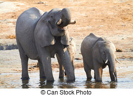 Stock Photo of Elephant Swiming Chobe River, Chobe National Park.