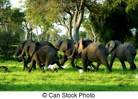 Chobe national park Clipart and Stock Illustrations. 8 Chobe.