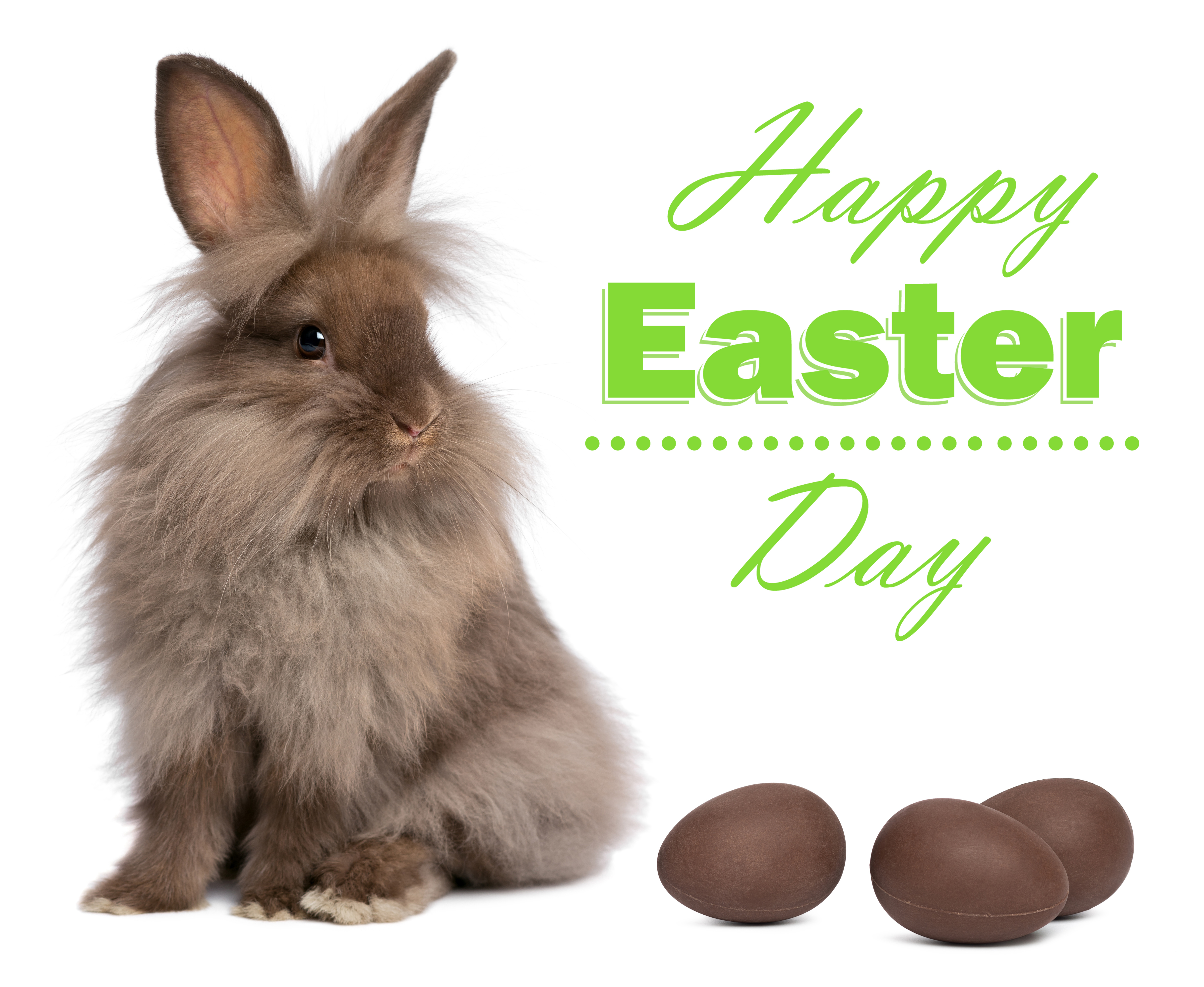 Cute Easter Bunny with Chocolate Eggs Background.