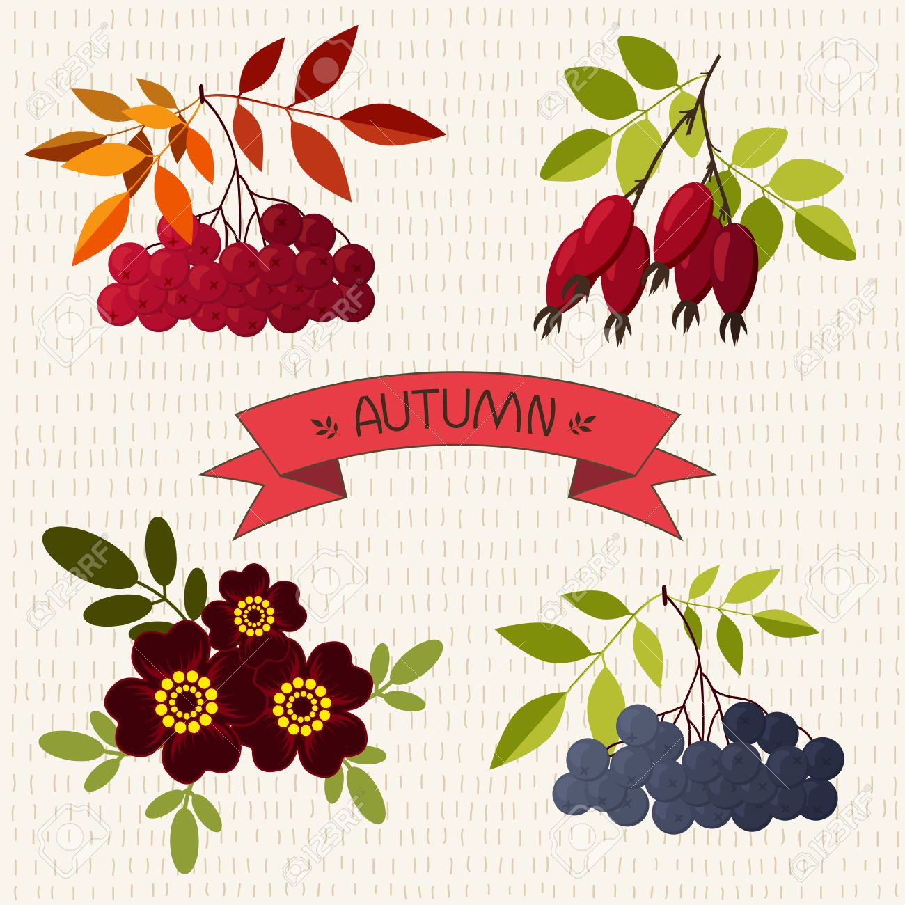 Autumn. Mountain Ash, Chokeberry, Rose, Marigold On The Hand.