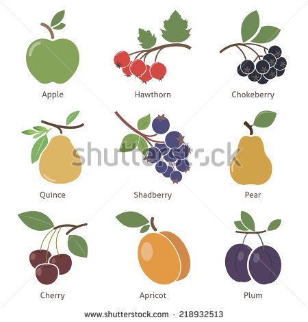 Black Chokeberry Stock Photos, Royalty.