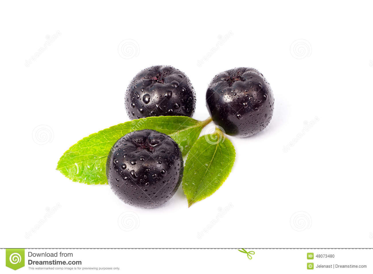 Aronia Stock Photos, Images, & Pictures.