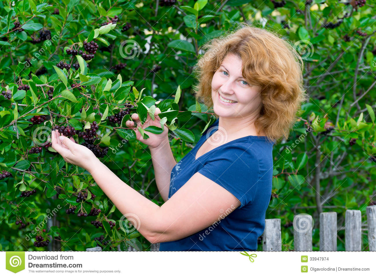 Woman In A Black Chokeberry Bush In The Garden Stock Images.