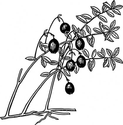 Cranberry clip art vector, free vector graphics.