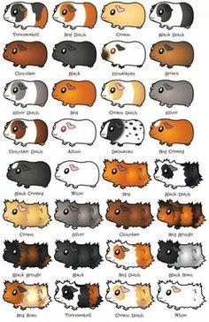 pig breeds chart.