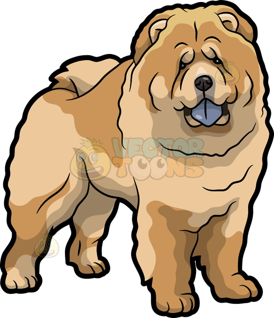A Very Cute Chow Chow Dog Cartoon Clipart.