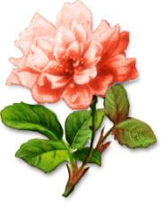 Free Chrysanthemum Clipart.
