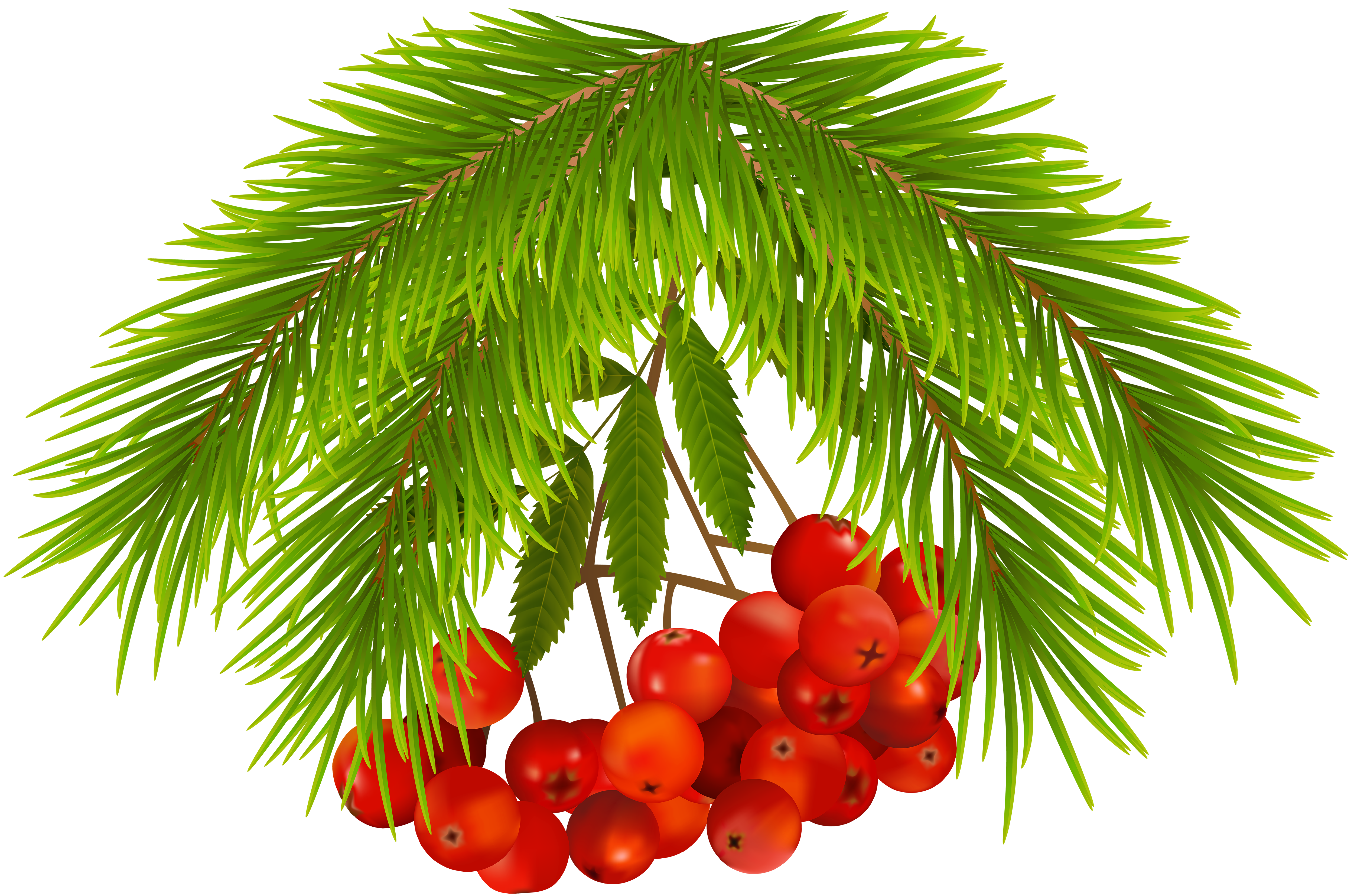 Christmas Holly Berries PNG Clip Art Image.