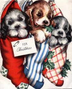 cute Christmas puppy and candy cane Yorkie ….