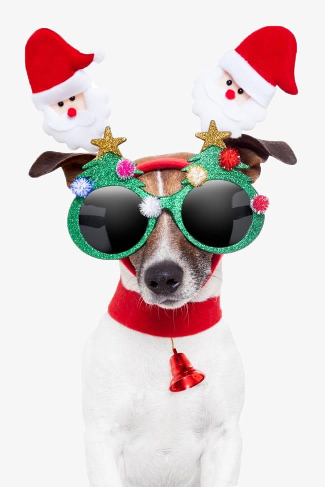 Christmas dog PNG clipart.